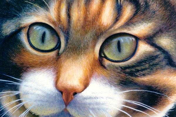 Site de chat quebecois gratuit sans inscription